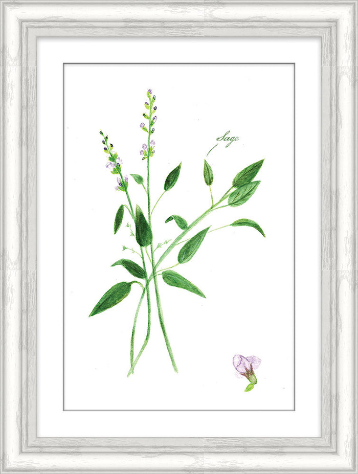 Sage Herb Framed Art