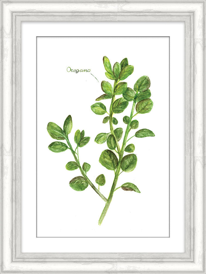 Oregano Herb Framed Art