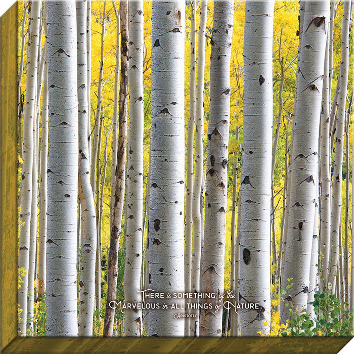 Something of the Marvelous Birch Canvas