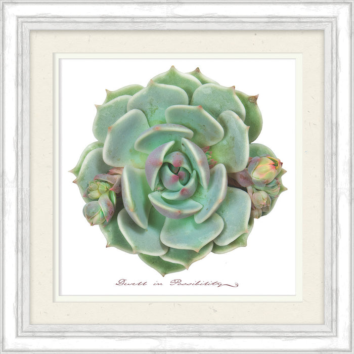 Dwell In Possibility Succulent Framed Art