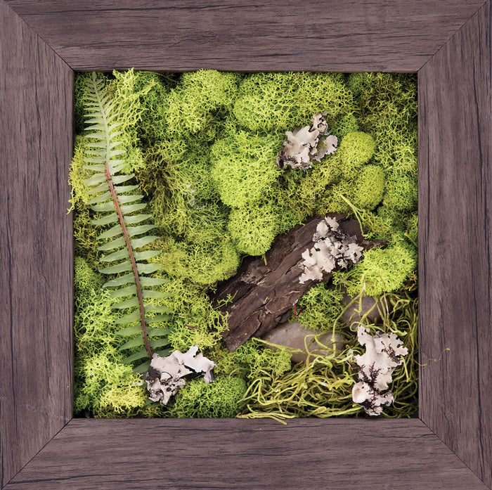 Natural Wonder - Biophilic Framed Art