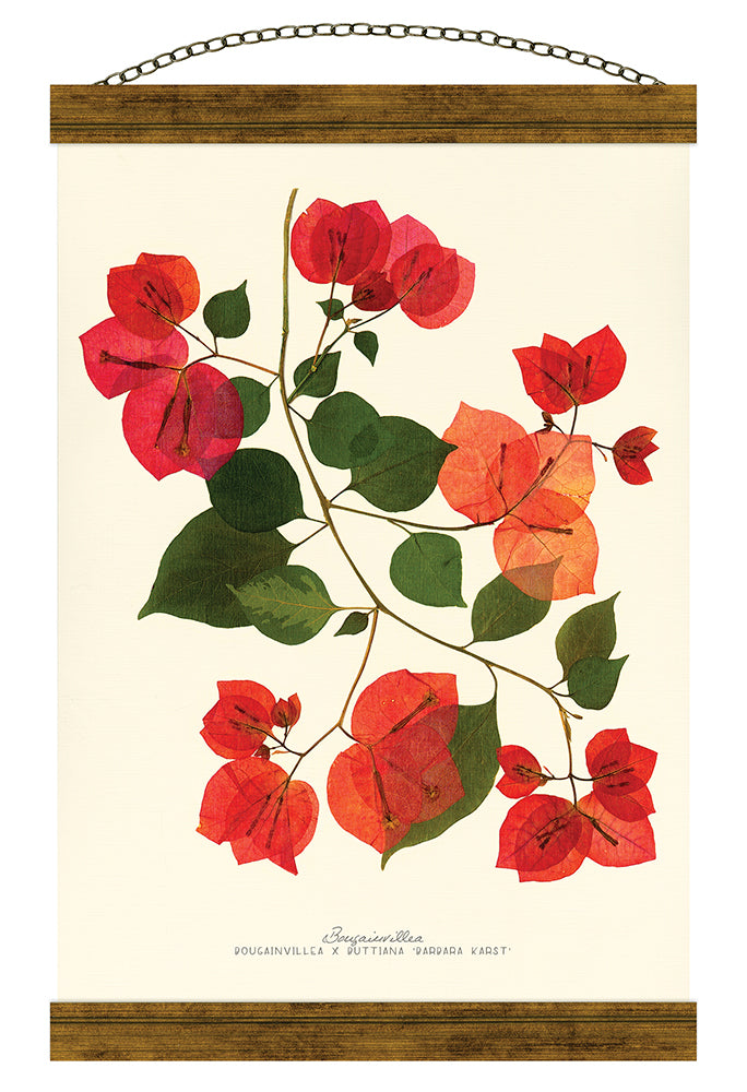 Bougainvillea Hanging Banner Wall Art - Carpentree