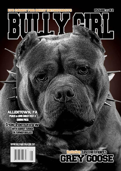 Bully Girl - Digital Issue 42 - BGM Warehouse - The Best Bully Breed Magazines, Clothing and Accessories