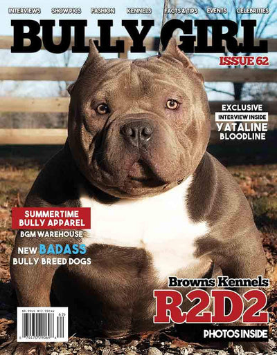 Bully Girl - Digital Issue 62 - BGM Warehouse - The Best Bully Breed Magazines, Clothing and Accessories