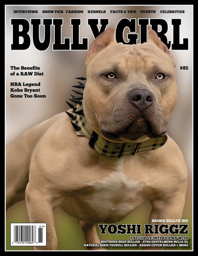 Bully Girl Magazine Issue 85 - BGM Warehouse - The Best Bully Breed Magazines, Clothing and Accessories