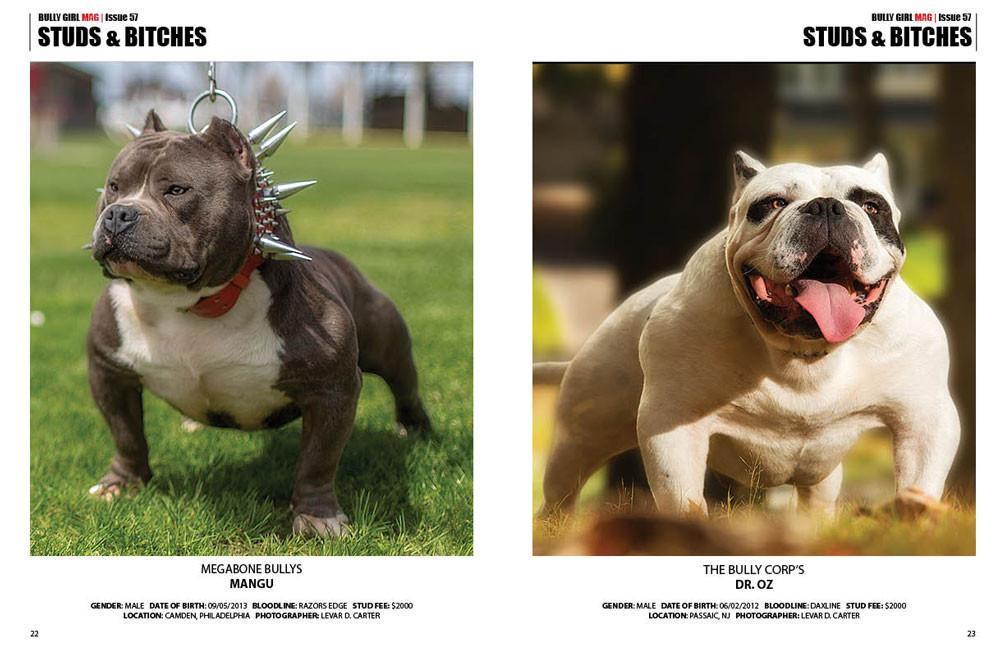 Bully Breed Dogs
