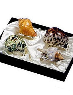 Seashell Melange Napkin Ring Set