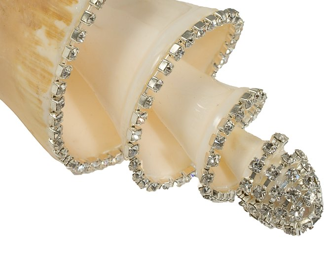 Neptune's Jewels Crystal Shell Collection Lambis Truncate Spiral - Nautical Luxuries