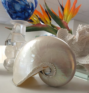 Neptune's Jewels Crystal Shell Collection Pearl Nautilus - Nautical Luxuries