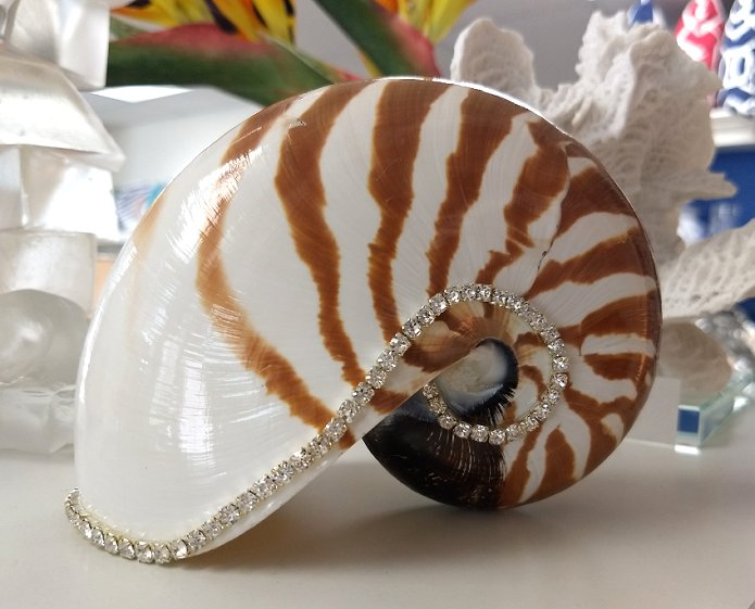Neptune's Jewels Crystal Shell Collection Tiger Nautilus