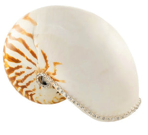 Neptune's Jewels Crystal Shell Collection Tiger Nautilus - Nautical Luxuries