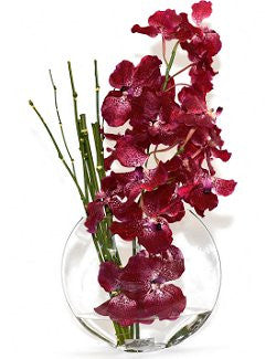 Vanda Orchids With Horsetails Yacht Silks Arrangement