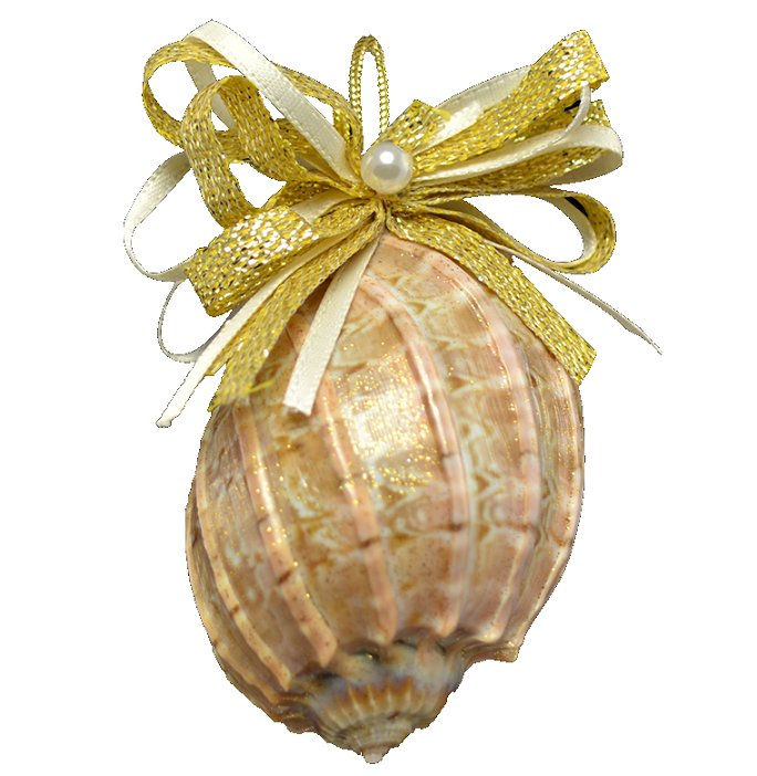 Natural Deep Sea Shells Ornament Set