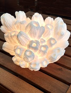 Lotus Coral Translucent Accent Lamp - Nautical Luxuries