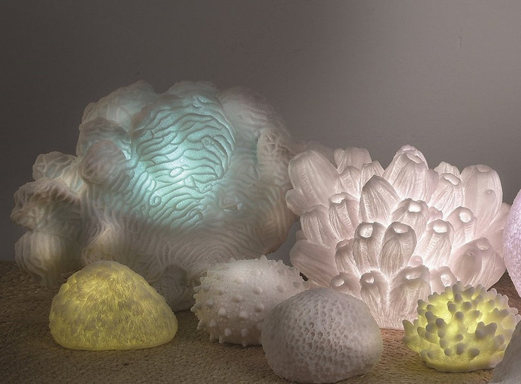 Lotus Coral Translucent Accent Lamp