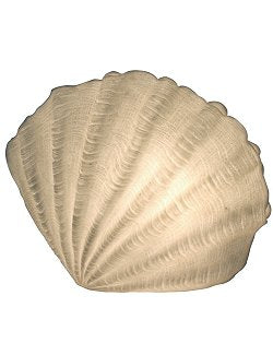 Scallop Shell Translucent Accent Lamp