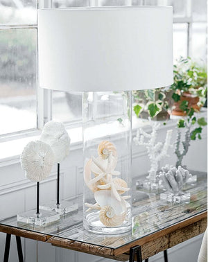 Shell Collector's Showcase Cylinder Lamp - Nautical Luxuries