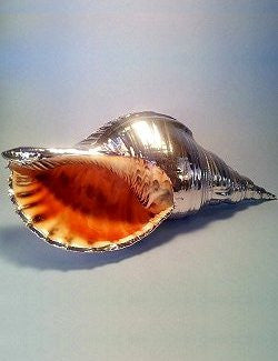 Giant Trumpet Triton Silver Dipped Shell