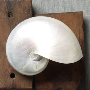 Giant Polished Pearl Nautilus Shell - Nautical Luxuries