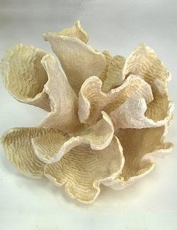 South Pacific Faux Lettuce Coral Sculpture - Nautical Luxuries