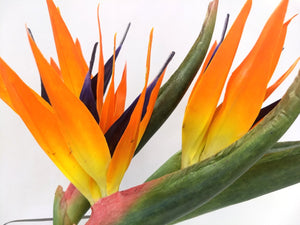 Bird Of Paradise Yacht Silks Arrangement - Nautical Luxuries