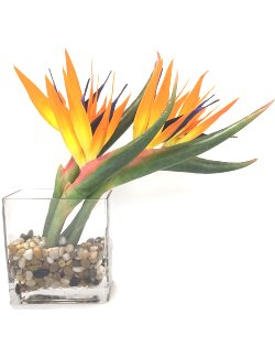 Bird Of Paradise Yacht Silks Arrangement