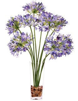 Blue Agapanthus Spray Yacht Silks Arrangement