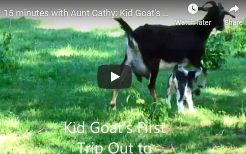 Kid Goat's First Trip Out to Pasture