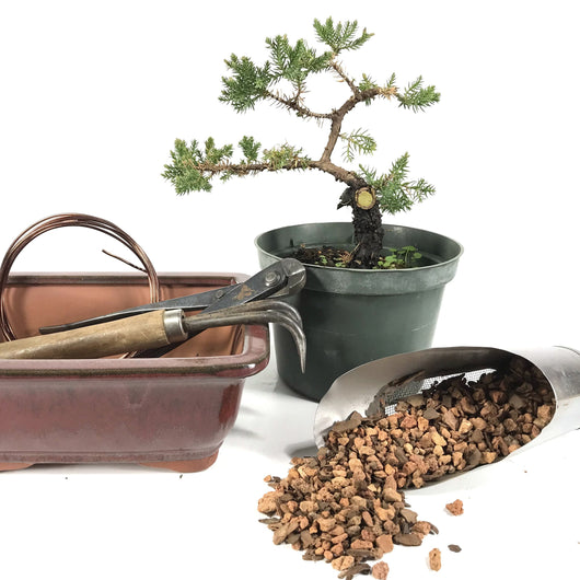 April 10, 2021 - 9:30am - 3:00pm - Japanese Juniper Workshop