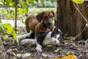 Diabetes in Dogs and Cats: Lifelong Impacts, Signs and Preventative Methods