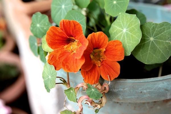 Plant a Beneficial Garden This Year