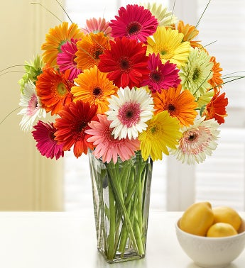 Two Dozen Gerbera Daisies - Assorted Colors in a Clear Vase
