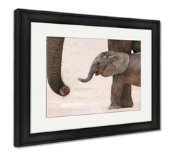 Framed Print - Baby Elephant and Mom