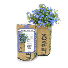 Grow Kit, Forget Me Not