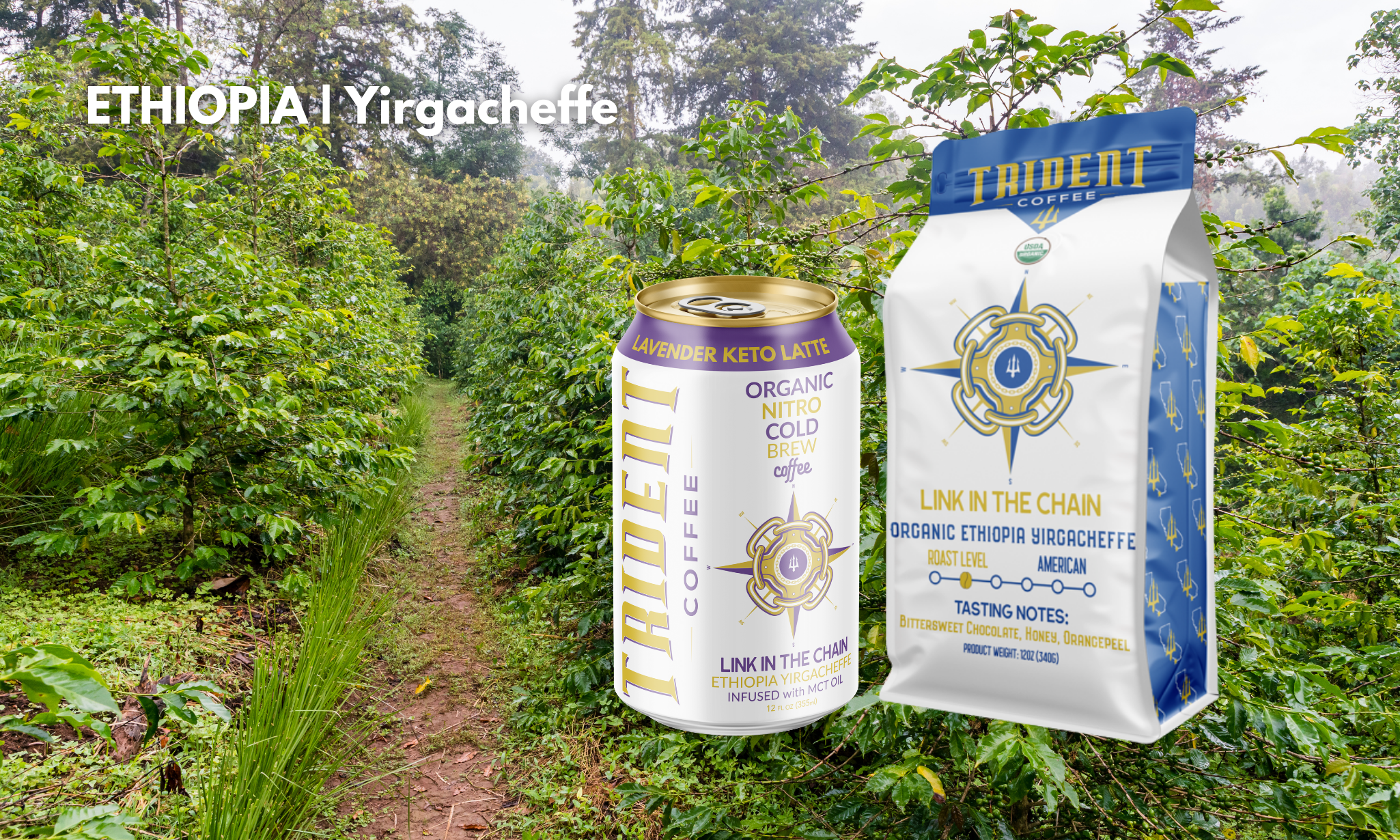 link in the chain - trident coffee - roasted coffee - cold brew - Ethiopia