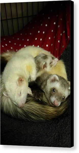 Ferret Pile - Canvas Print