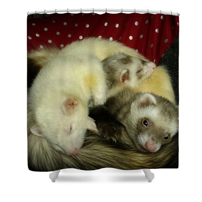 Ferret Pile - Shower Curtain