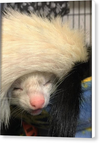 Ferret Tail Hat - Canvas Print