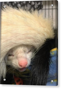 Ferret Tail Hat - Acrylic Print