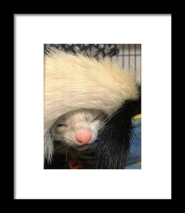 Ferret Tail Hat - Framed Print