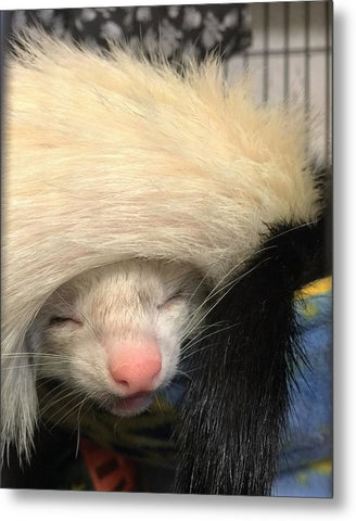 Ferret Tail Hat - Metal Print
