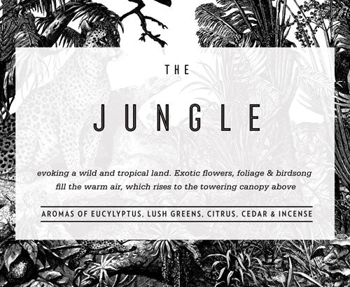 The Jungle: Evoking a wild and tropical land. Exotic flowers, foliage and birdsong fill the warm air, which rises to the towering canopy above.   Aromas of Eucalyptus, lush greens, Citrus, cedar wood and incense