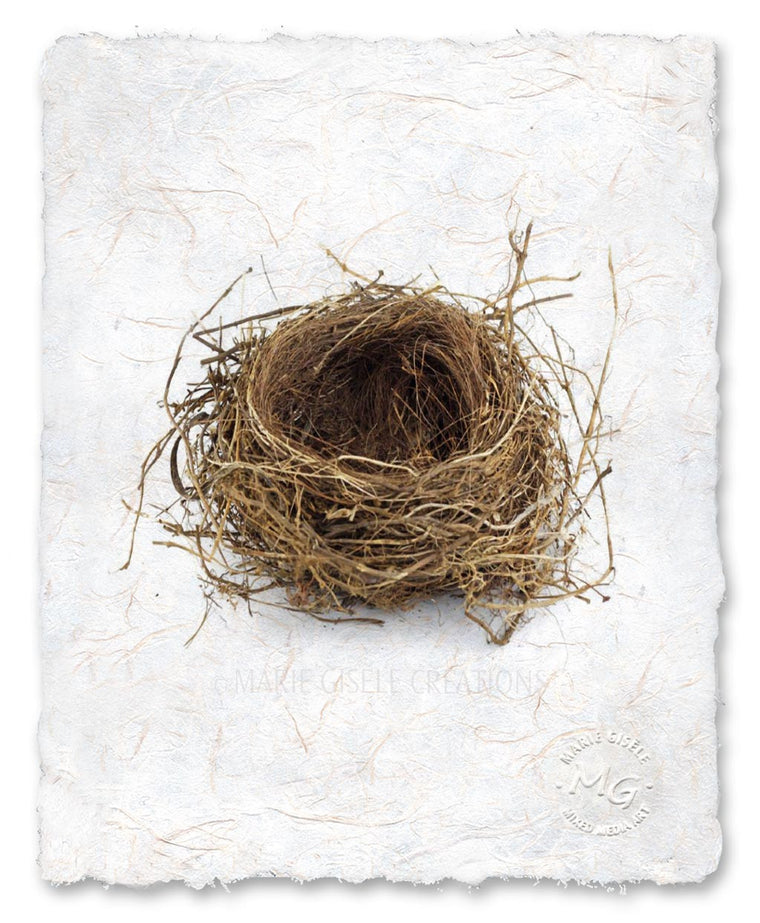 Bird Nest II