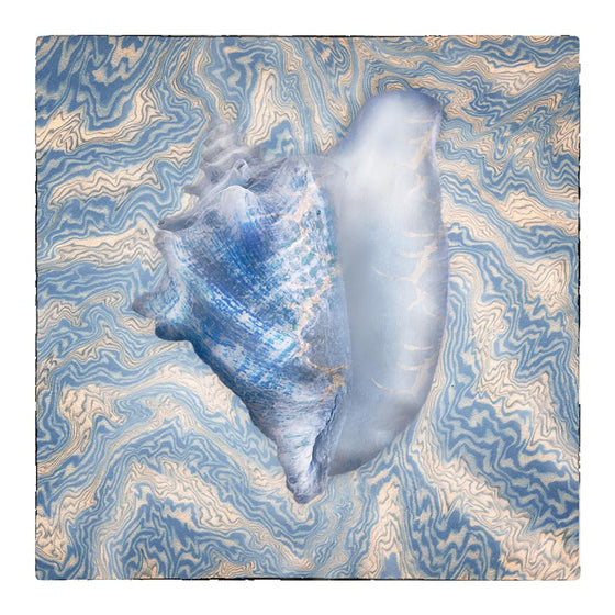 Blue Conch on Blue Tapestry