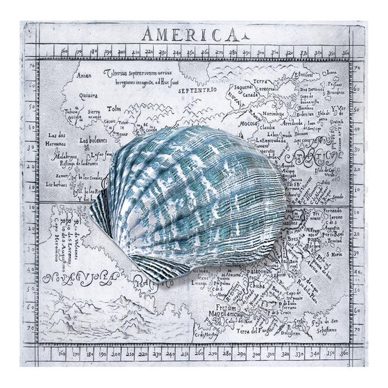 Cockle Shell on Blue Map