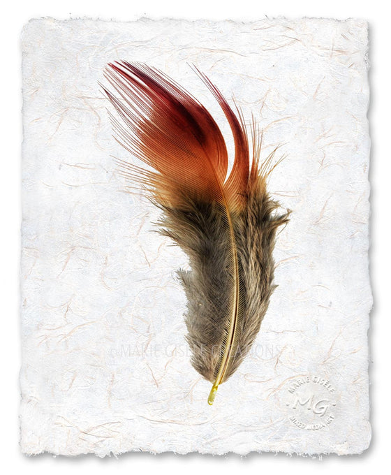 Fall Feather
