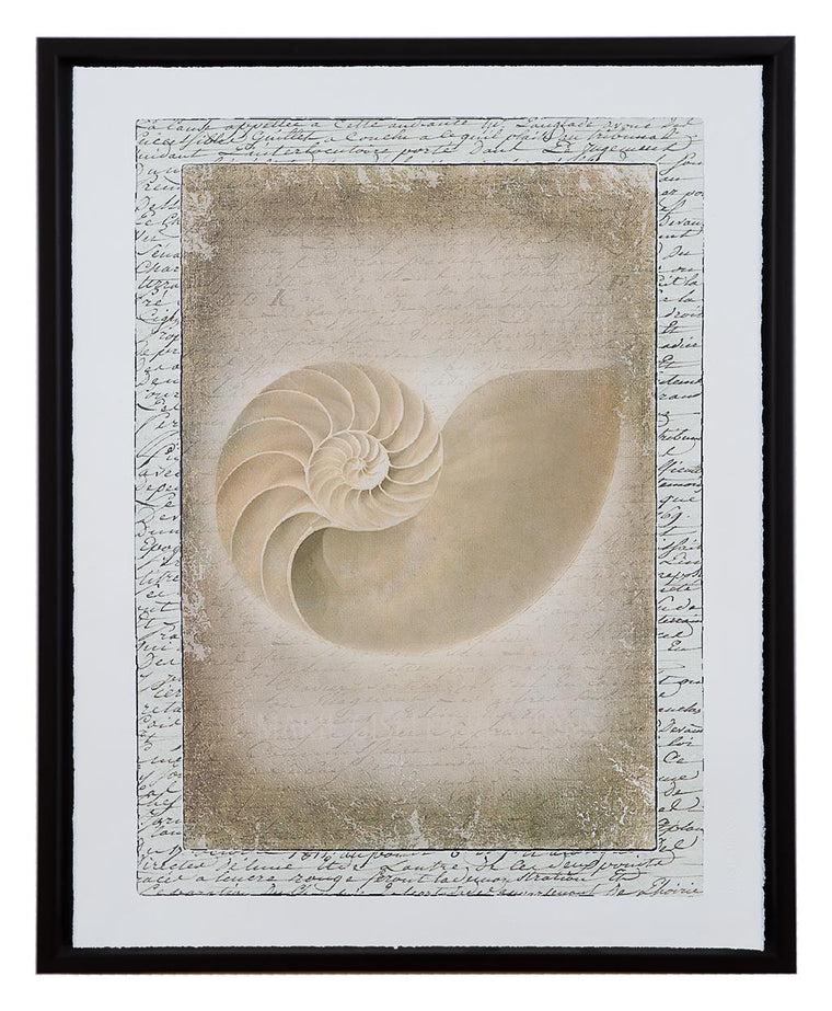Natural Nautilus Seashell