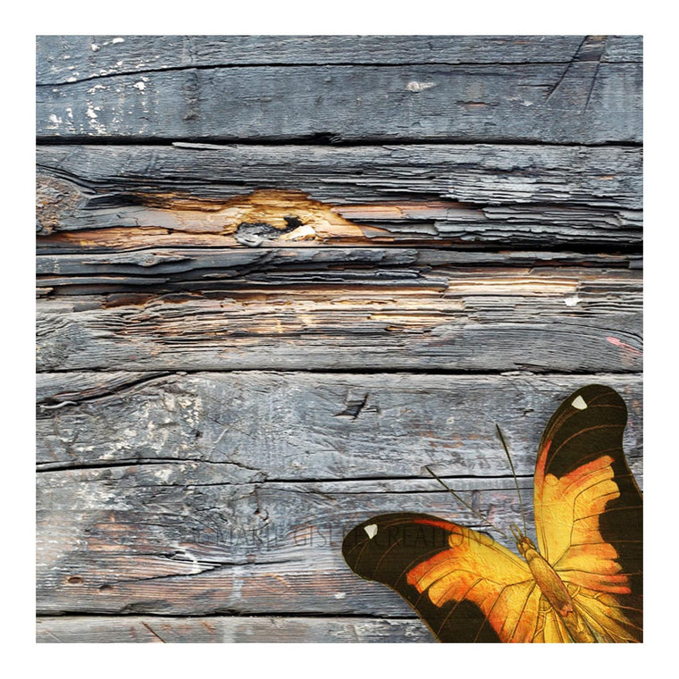 Orange Butterfly on Barn Wood