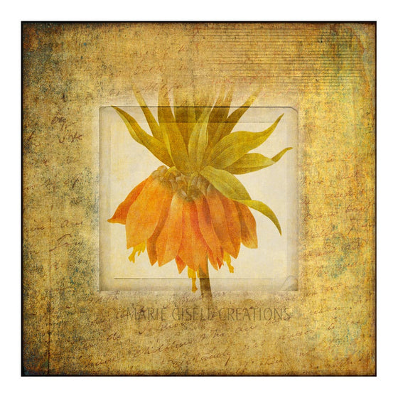 Framed Orange Flower
