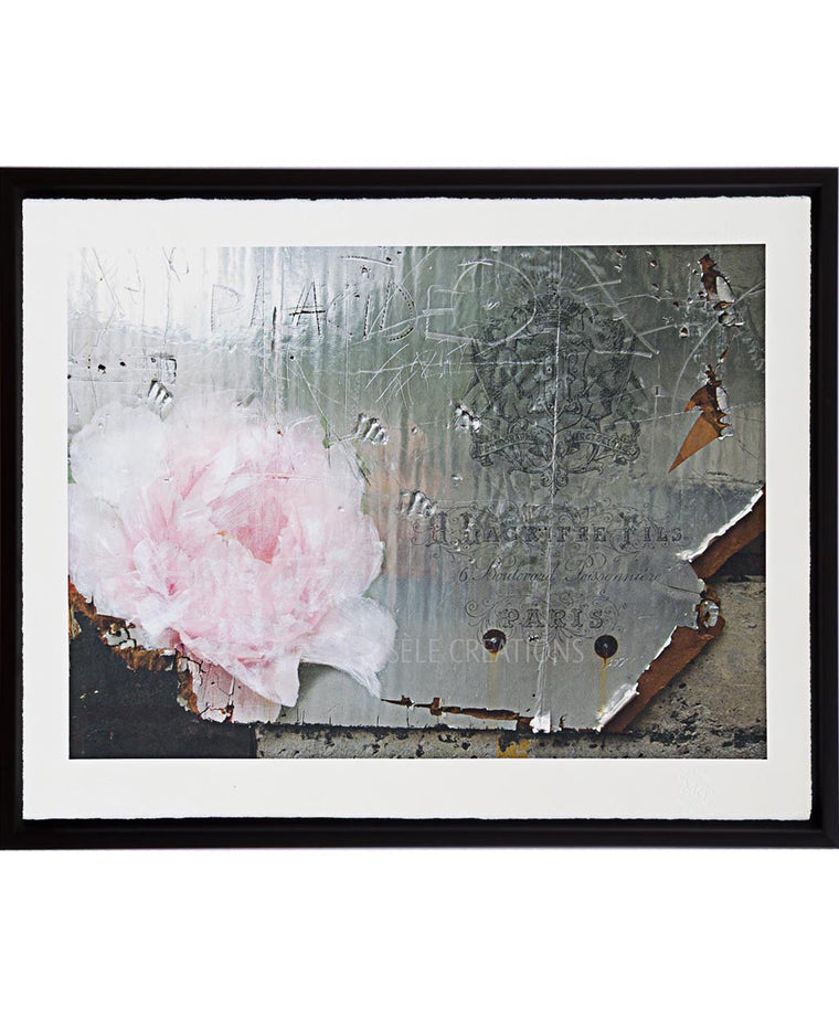 Rose on Silver Metal Wall